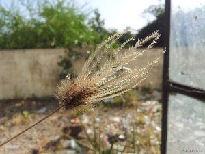 galaxy note camera focus